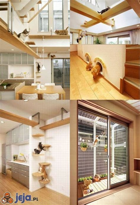 cat friendly home design idealny dom dla kot 243 w obrazki jeja pl