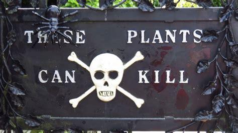 cantik tapi bisa membunuh   taman  beracun
