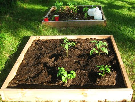 why raised garden beds raised garden bed the good thing about gardening