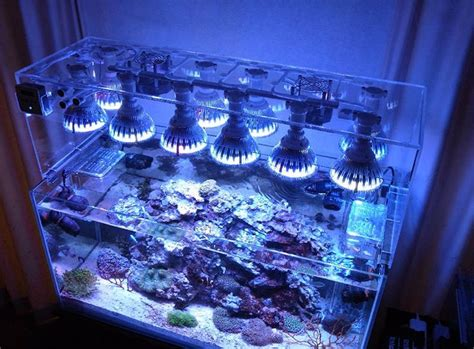 best light for planted tank 12 best planted tank light images on pinterest fish