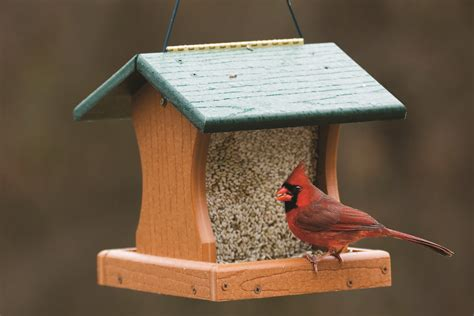 bob s tuesday s tips for the birds university gardens