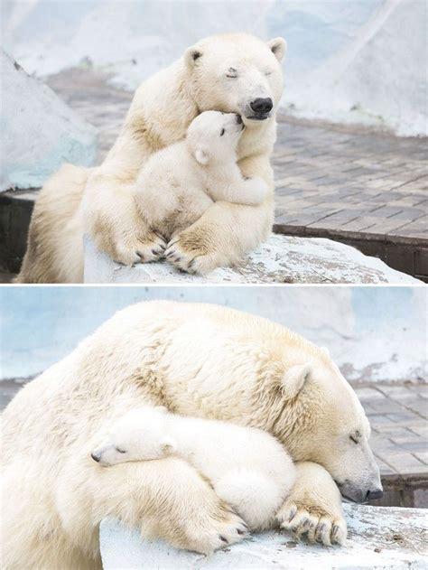 imagenes de hermosos osos el amor de mam 225 oso por sus cachorros momentos dulces