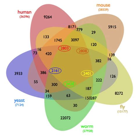 venn diagram gene five way venn diagram of orthologous genes in five species