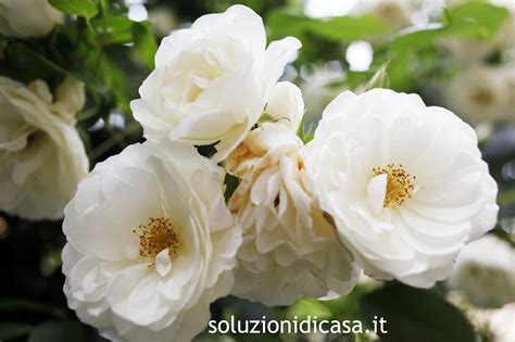fiori da giardino fiori da giardino perenni soluzioni di casa