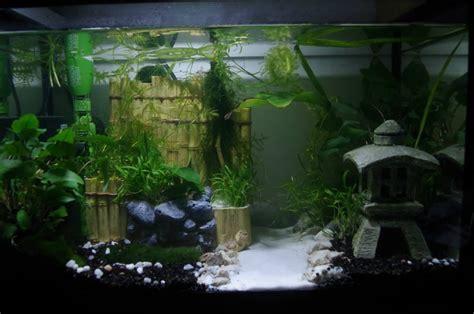 Bamboo Decoration Presentation 20 Litres Combattant