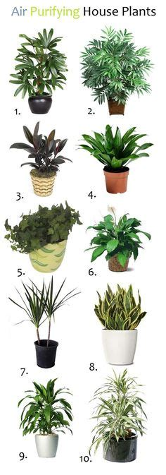 images  houseplants clean air  cats