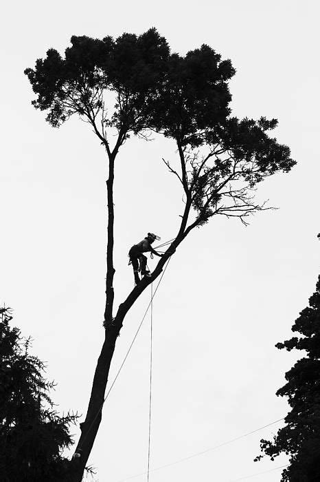 45 best Arborist images on Pinterest | Climbing, Chainsaw