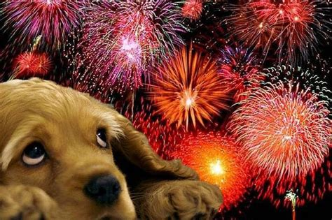 afraid of fireworks bonfire here s what you should do if your is scared of fireworks get west