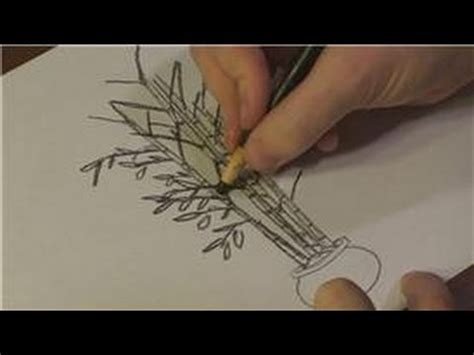 Drawing Of A Bamboo Tree by Nature Drawings How To Draw Bamboo Trees