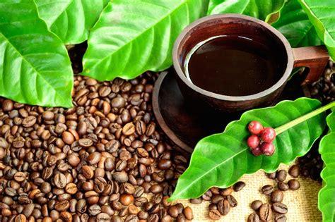 Kopi Siantar Kopi Hitam Coffe 4 langkah menikmati kopi hitam untuk pemula majalah