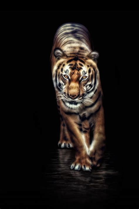~~ Indochinese tiger ~~ | Tigers | Pinterest