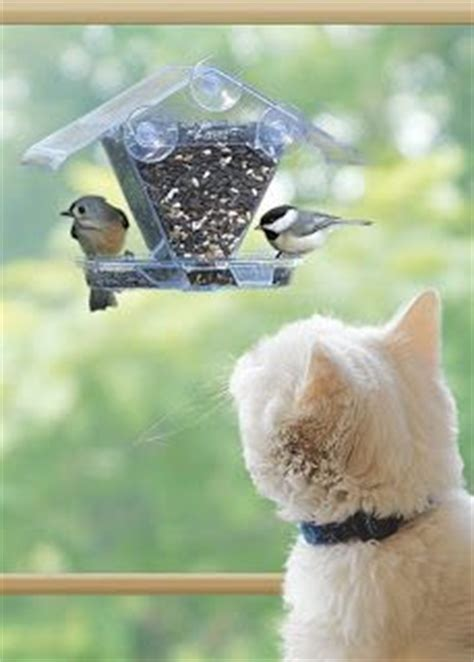 cool bird feeders on pinterest wild birds unlimited