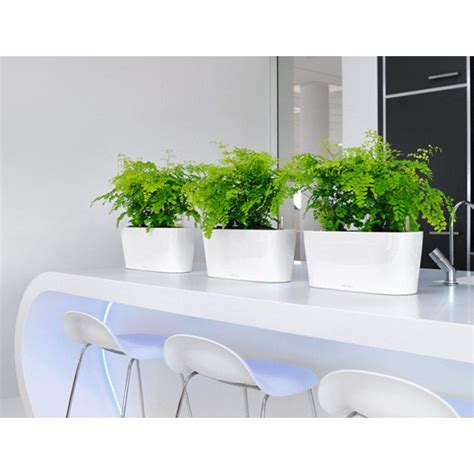 windowsill planter indoor lechuza windowsill planters newpro containers