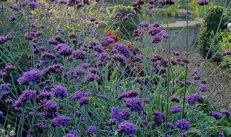 late flowering shrubs uk rhs says late flowering plants help our garden butterflies