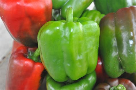 Grow Herbs Indoors by Growing Peppers Growin Crazy Acres