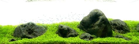 Aquascaping Stones by An Aquascape Using Hakkai Stones Live Planted