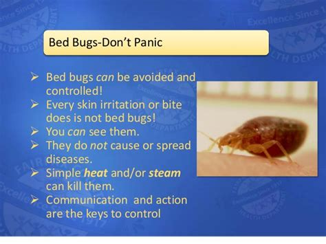 can bed bugs travel through walls can bed bugs travel through walls 28 images what are
