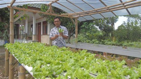 membuat kebun hidroponik di rumah teknik menanam sayur secara hidroponik swaragunungkidul