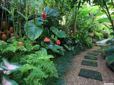 plants that grow in tropical climates that tropical plants you can grow in the uk and other cold