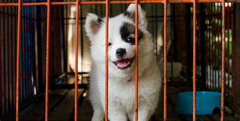pet stores that sell puppies u s city now legally requires pet stores to only sell rescue animals