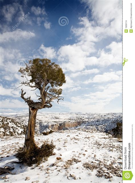design elements lone tree lone tree stock images image 1939174
