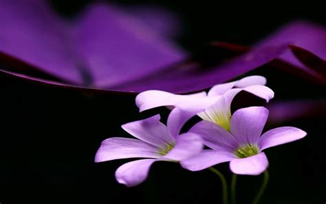 purple mood hd purple mood wallpaper download free 64780