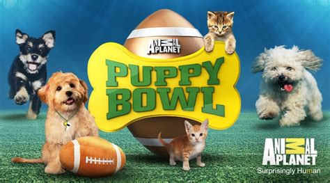 puppy bowl 2017 date rabbits from broomall rescue to be at this year s puppy bowl on animal