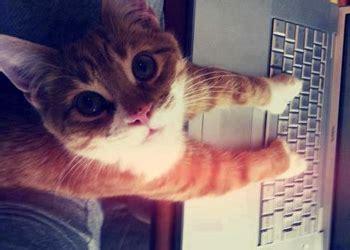 imagenes hipster gatos 10 temas trillados en tumblr 187 listeilor com