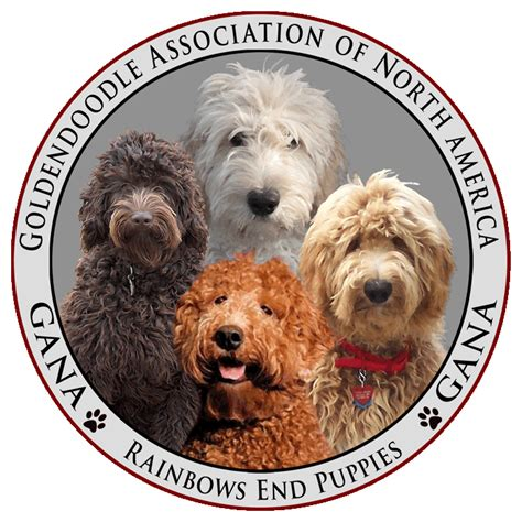 goldendoodle club of america rainbows end puppies about the goldendoodle association