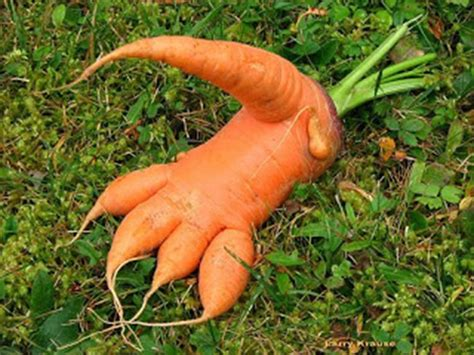are carrots bad for dogs image joke