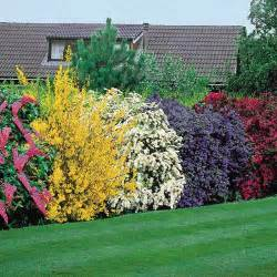 flowering trees and shrubs summer flower summer flowering shrubs