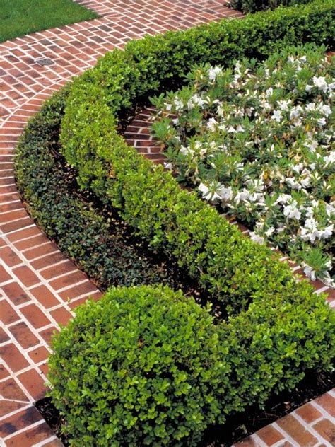 hedging ideas for gardens boxwood hedge design pictures remodel decor and ideas i like how the last plant is
