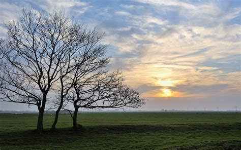 field bare trees clouds sunset wallpapers field bare