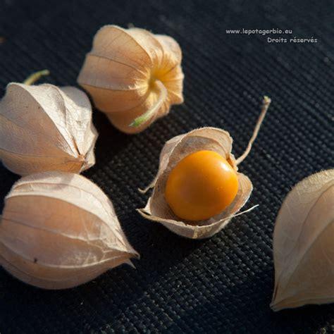 Le Celeri Craint Il Le Gel by Autres L 233 Gumes Le Potager Bio