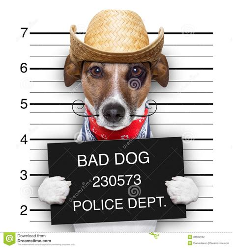 stinky puppy bad mexican stock photography image 31680162