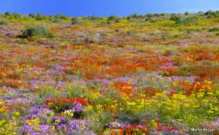 hester malan wildflower garden