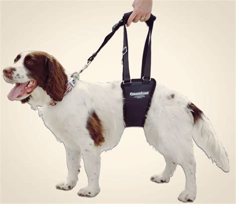 support dogs rear support harness hind leg support elsavadorla