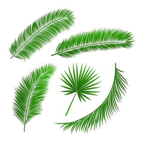 raccolta clipart raccolta di foglie di palma isolato illustrazione