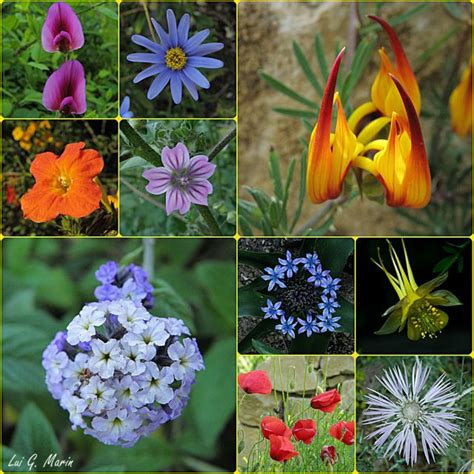 imagenes flores de jardin flores del jard 237 n bot 225 nico fotos de creaci 243 n y fotomontajes
