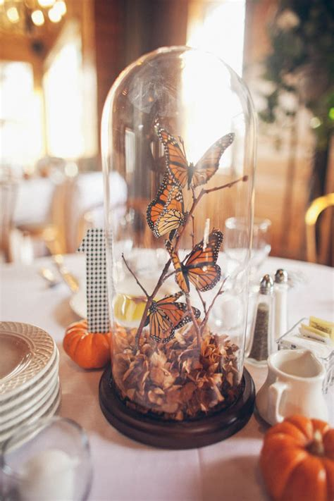 live centerpieces table butterflies pumpkins corn an autumnal wedding