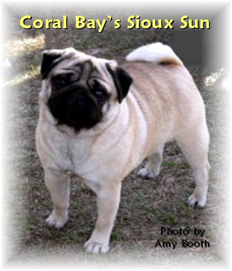 coral bay pugs sioux