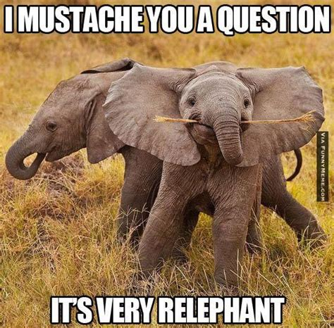 Elephant Meme - elephant funny mustache animal memes it s very relephant
