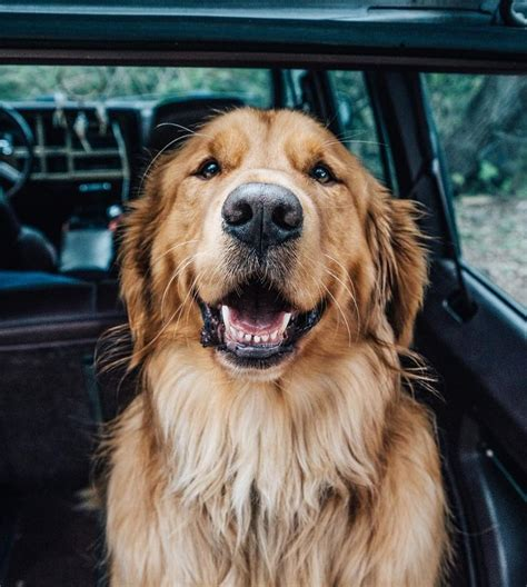 golden retriever names and meanings the 25 best puppy names ideas on