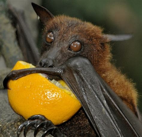15 interesting facts about bats you ve never heard before