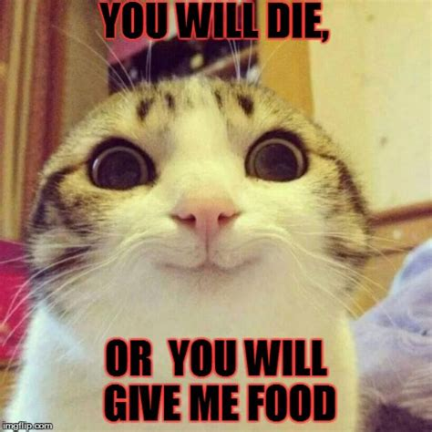 Food Cat Meme - smiling cat meme imgflip