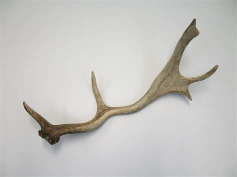Statue Home Decor Fallow Deer Antlers Set Of 3 Omero Home