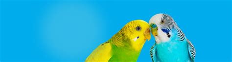 bird products hartz
