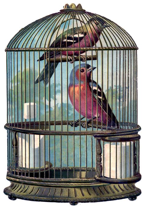 vintage graphic fabulous bird cage with birds the