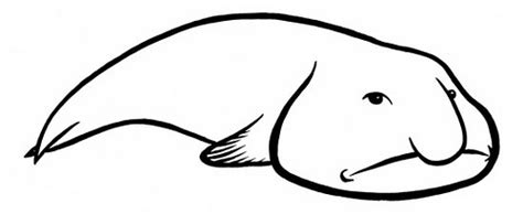 blob fish coloring page how to draw blob fish sketch coloring page