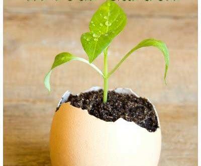 Pupuk Kaya Kalsium 5 kegunaan kulit telur bagi tanaman hidroponiq